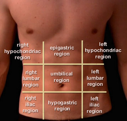 abdominal nine regions or areas
