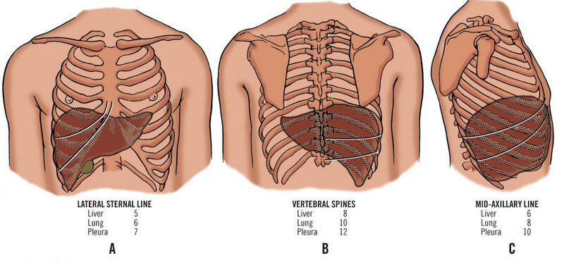 Location And Pictures Of Different Organs In The Abdomen