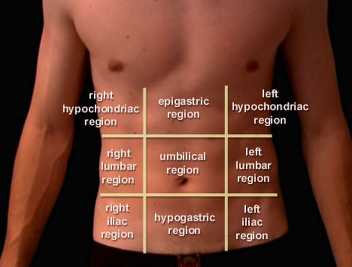 nine abdominal regions or areas