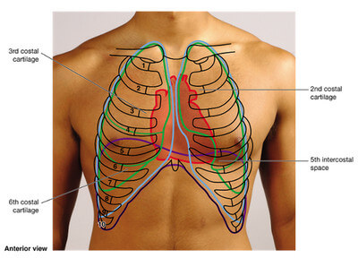 where is the heart located ? boundaries and surface anatomy, Human Body