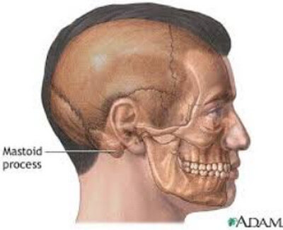 Location of Mastoid Process picture