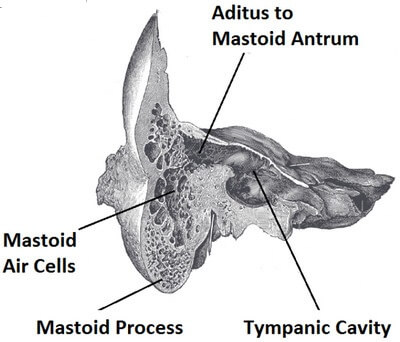 Mastoid Air Cells and the Nearby Structures image
