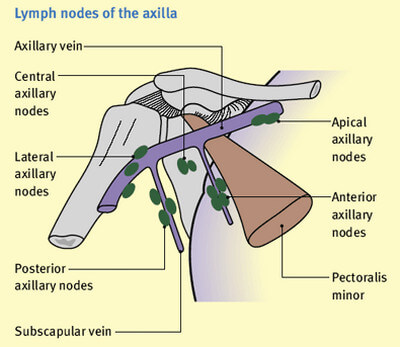 lymph nodes: pictures, location (axillary, cervical, inguinal, Human Body