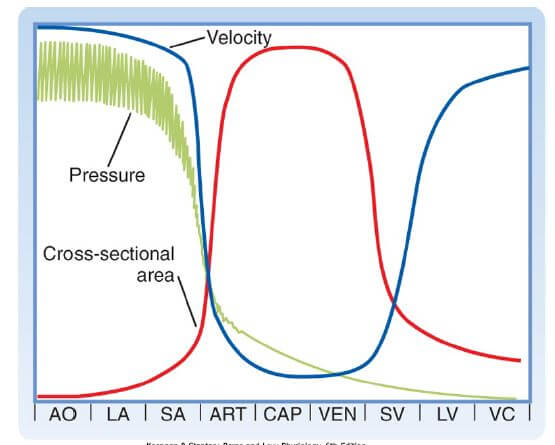 blood vessel relationship between pressure, velocity, and cross-sectional area