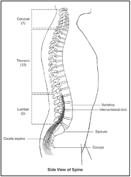 Facet Arthropathy - Definition, (lumbar, cervical, mild, moderate ...