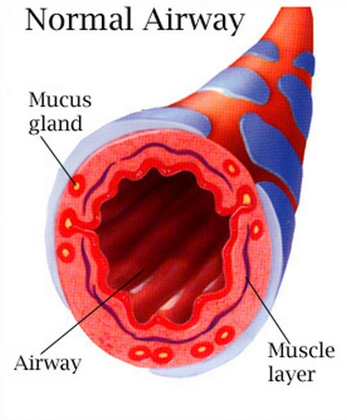 A clinical presentation of a health airway.picture