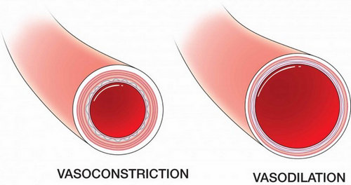 What is vasoconstriction ? definition, hypoxic and ...
