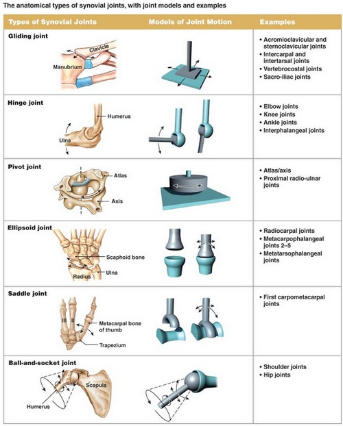A table presentation of the different types of synovial joints in the human body.image